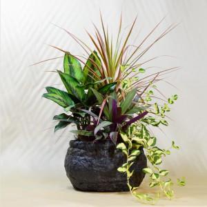 アジアンテイストの観葉植物の寄せ植え